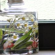 ハーバリウム スタッキングボトル angers/植物標本